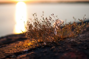 Staudamm Sonnenuntergang